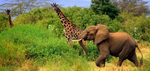 Voyage sur mesure en Tanzanie