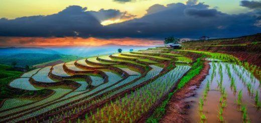 Vacances au Vietnam chez des locaux